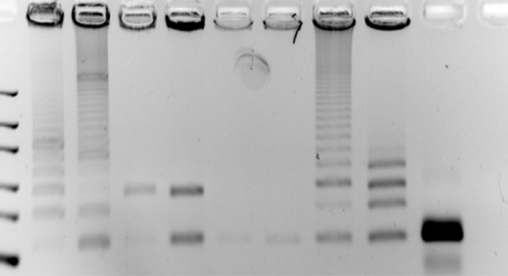 By-Product Formation in Repetitive PCR Amplification…